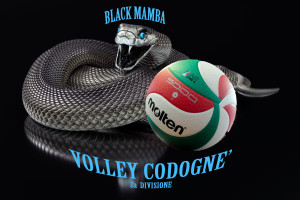 black mamba VOLLEY